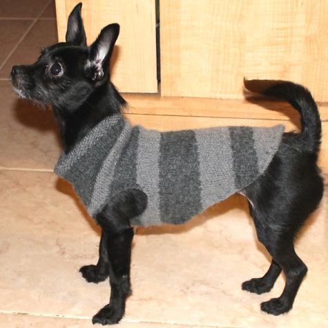 Как сделать одежду для собак своими руками видео